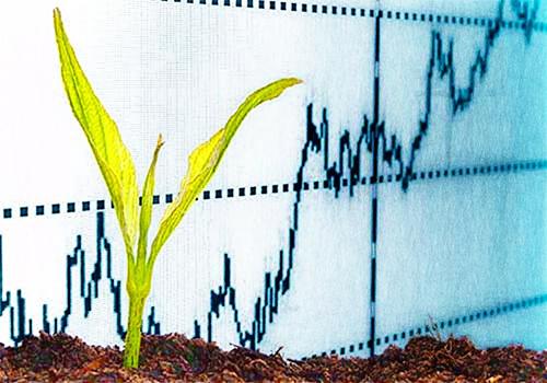 Activos biológicos: directriz fiscal, medición bajo Estándares Internacionales e impuesto diferido