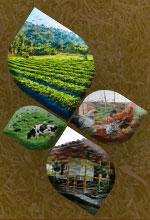 Activos biológicos según los Estándares Internacionales y la Ley 1819 de 2016